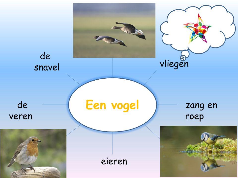 Een vogel de veren de snavel vliegen zang en roep eieren