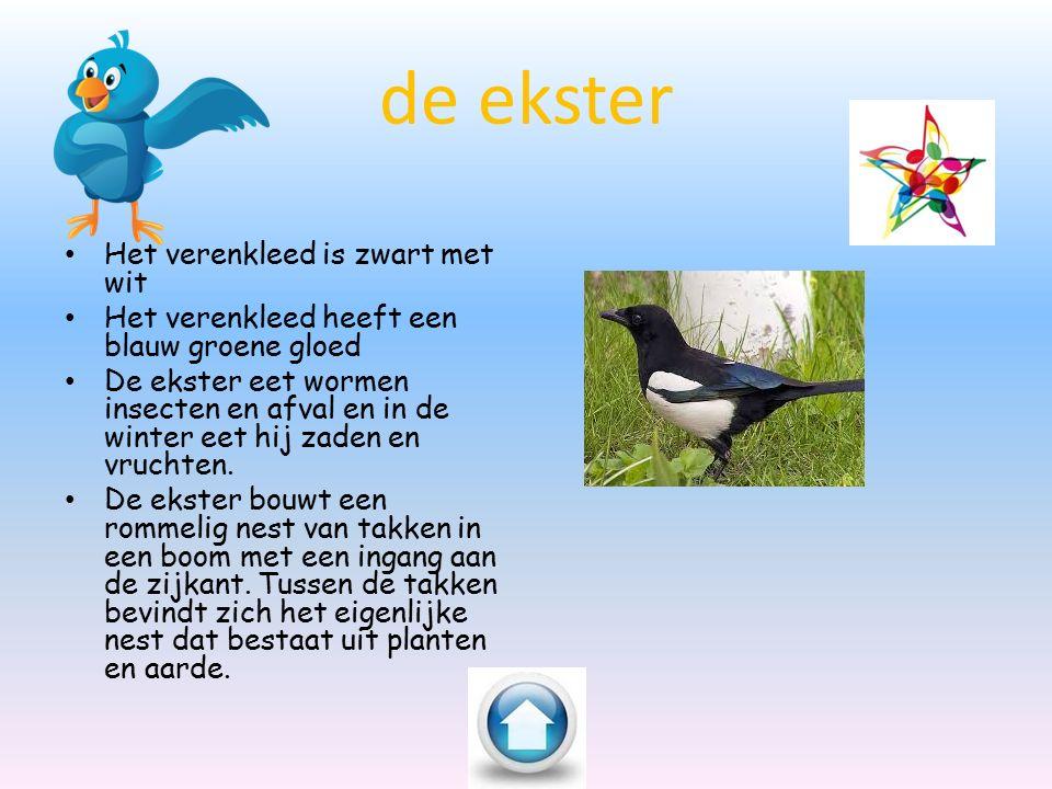 de duif Duiven komen overal voor, bijvoorbeeld in je eigen tuin of een park.