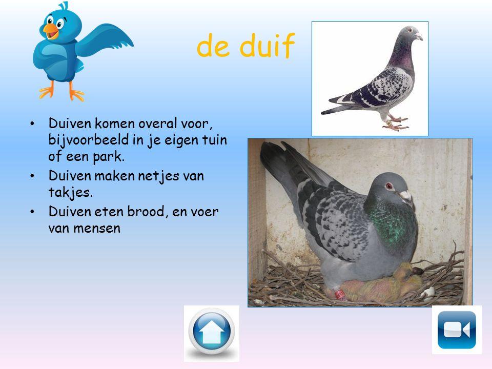 de duif Duiven komen overal voor, bijvoorbeeld in je eigen tuin of een park. Duiven maken netjes van takjes. Duiven eten brood, en voer van mensen