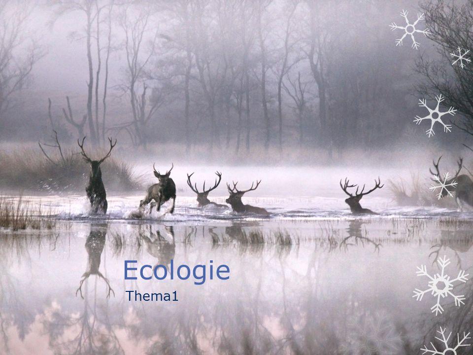 Invloeden uit milieu  In ecologie bestuderen we alle relaties tussen organismen en hun milieu (leefomgeving)  Levende natuur = biotische factoren  Levenloze natuur= abiotische factoren