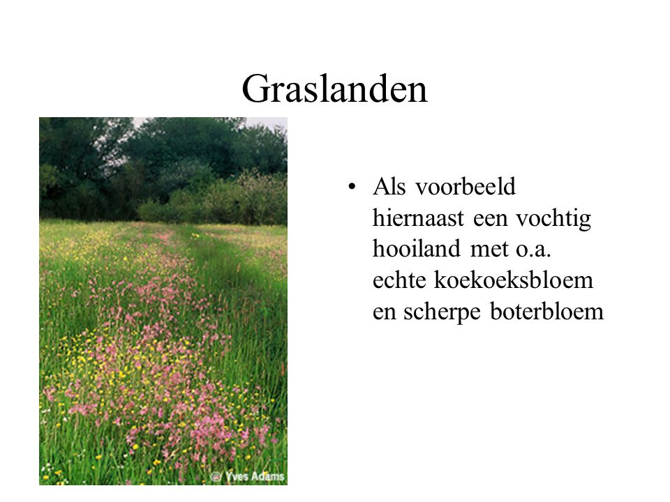 Er zijn verschillende typen grasland.Waardoor zijn de verschillen ontstaan.
