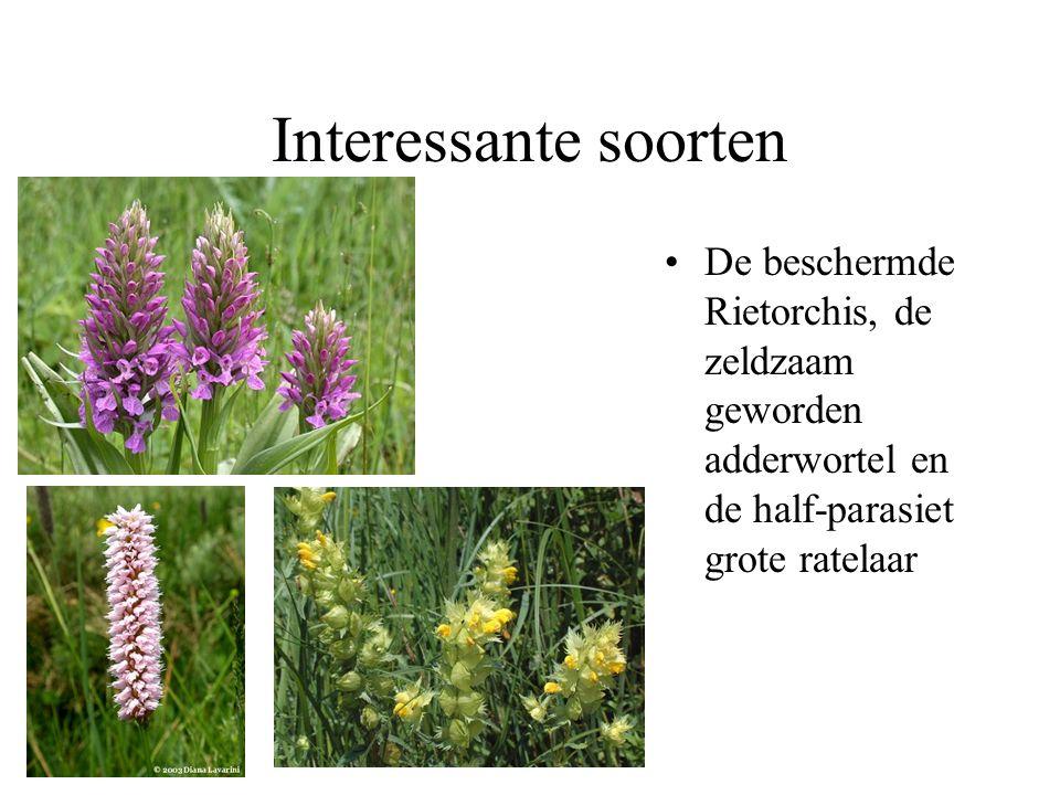 Graslanden op vochtige matig voedselrijke bodem Scherpe boterbloem en veldzuring geven al een mooi bloemrijk beeld