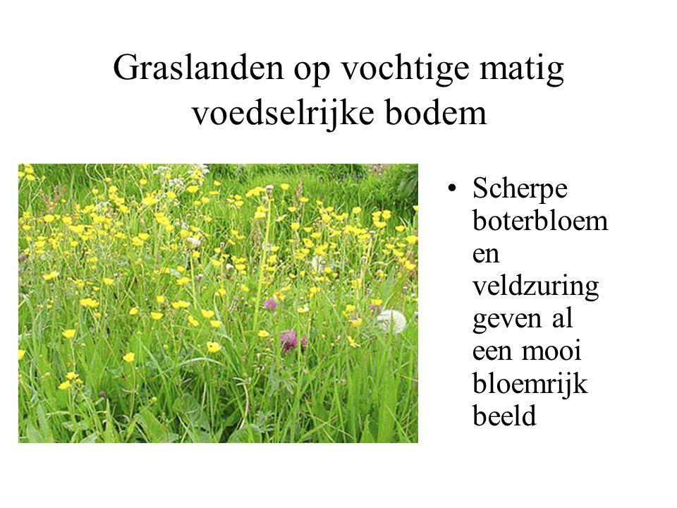 Graslanden van natte/vochtige voedselrijke grond