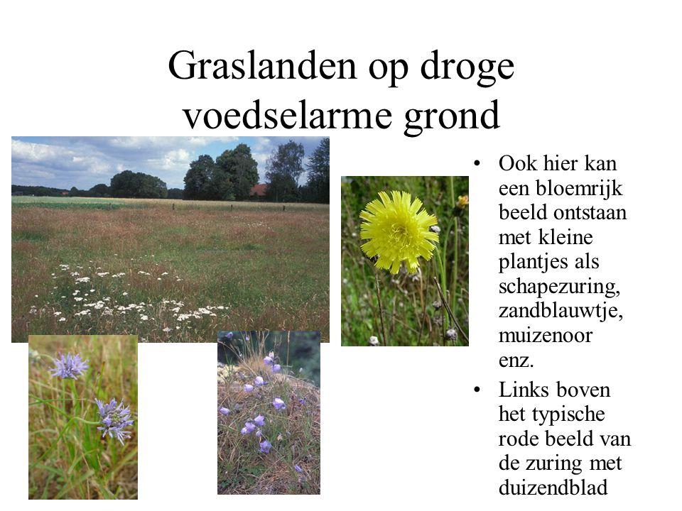 Beheer van graslanden