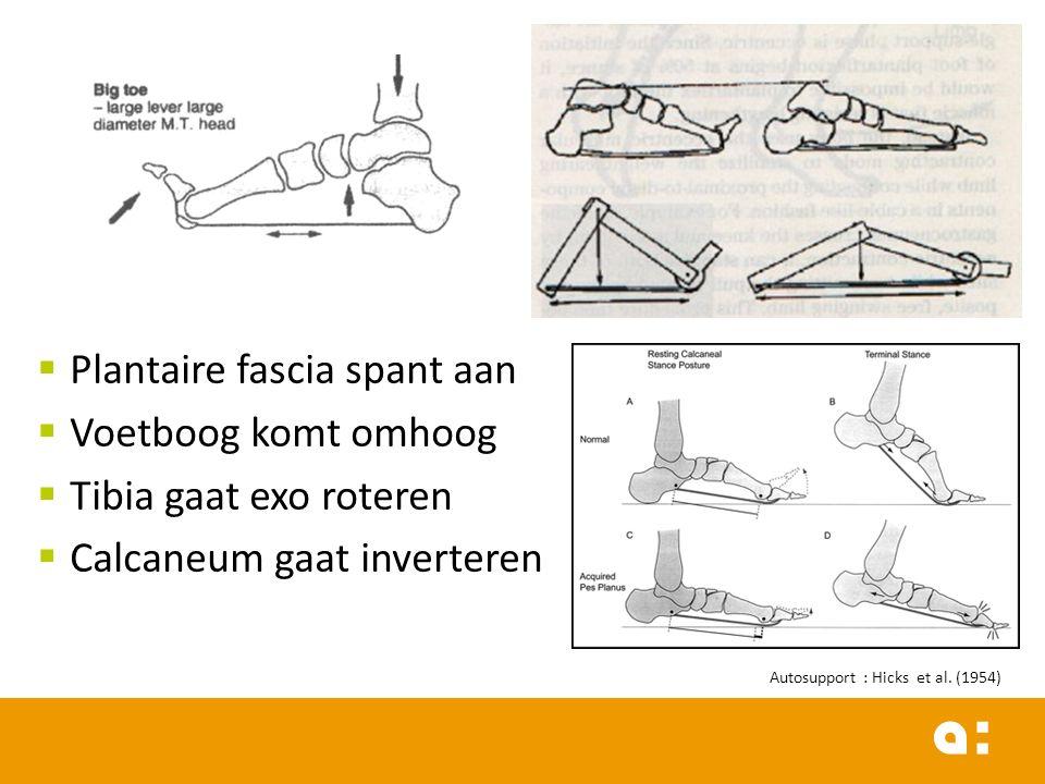  Plantaire fascia spant aan  Voetboog komt omhoog  Tibia gaat exo roteren  Calcaneum gaat inverteren Autosupport : Hicks et al.