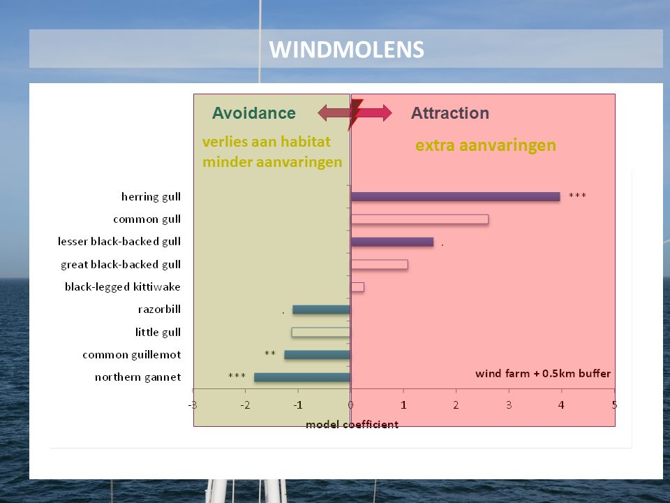 AvoidanceAttraction verlies aan habitat minder aanvaringen extra aanvaringen WINDMOLENS