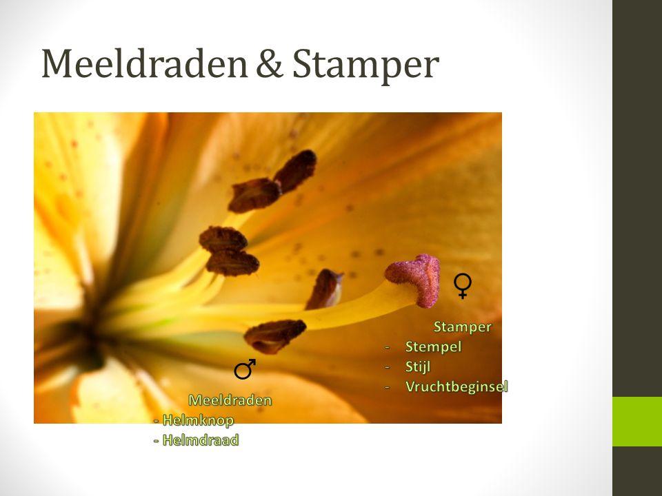 Meeldraden & Stamper