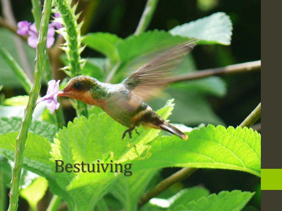 Bestuiving