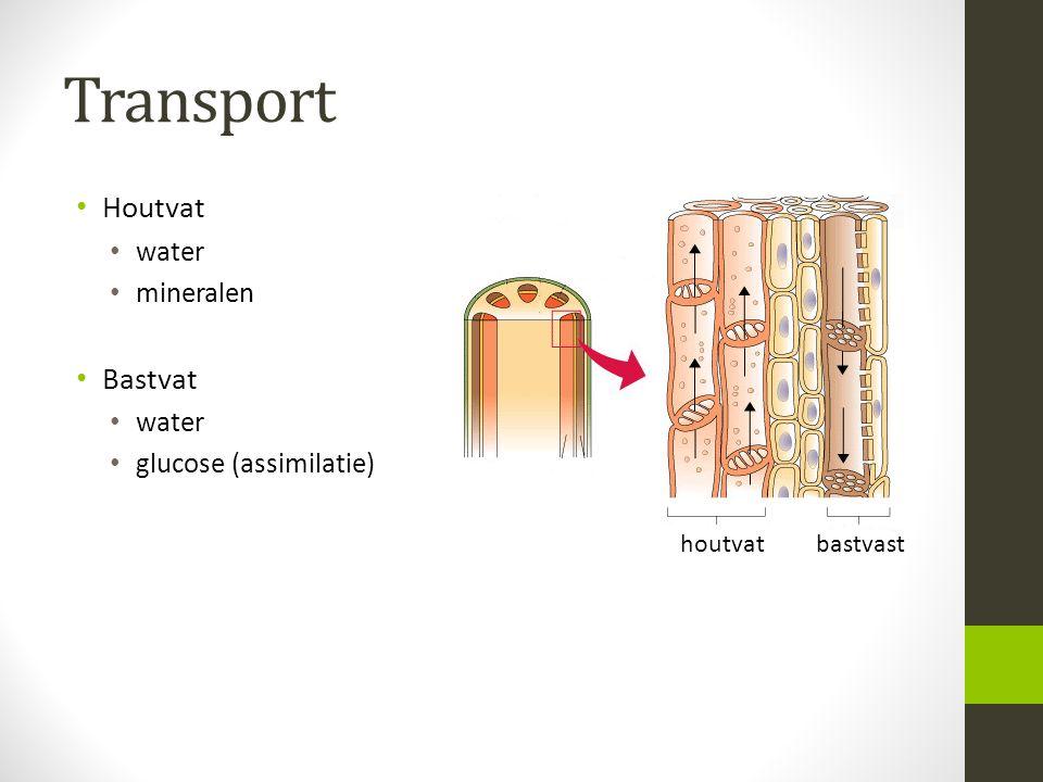 Transport Houtvat water mineralen Bastvat water glucose (assimilatie) houtvat bastvast