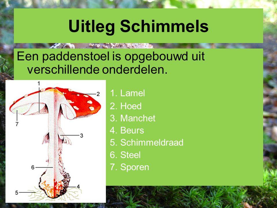 Uitleg Schimmels Een paddenstoel is opgebouwd uit verschillende onderdelen. 1. Lamel 2. Hoed 3. Manchet 4. Beurs 5. Schimmeldraad 6. Steel 7. Sporen