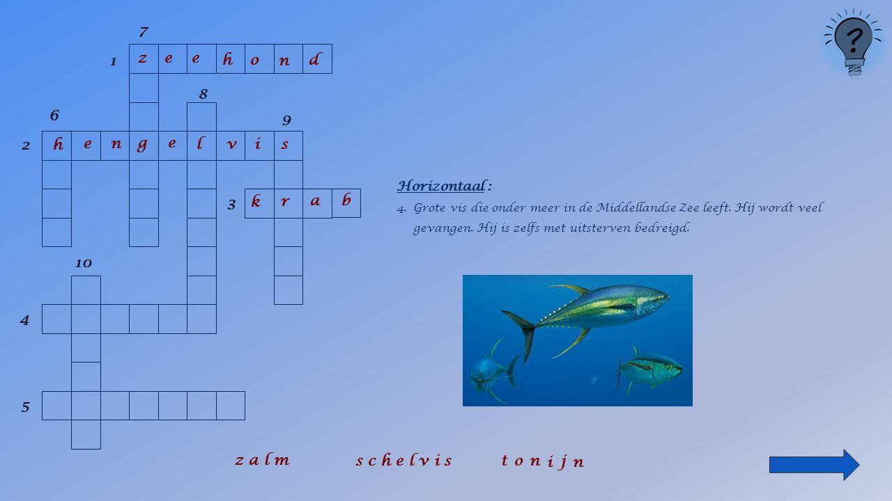 1 2 6 8 9 3 4 5 10 Horizontaal : 3.Schaaldier met een min of meer rond lichaam dat ook in de Noordzee voorkomt.
