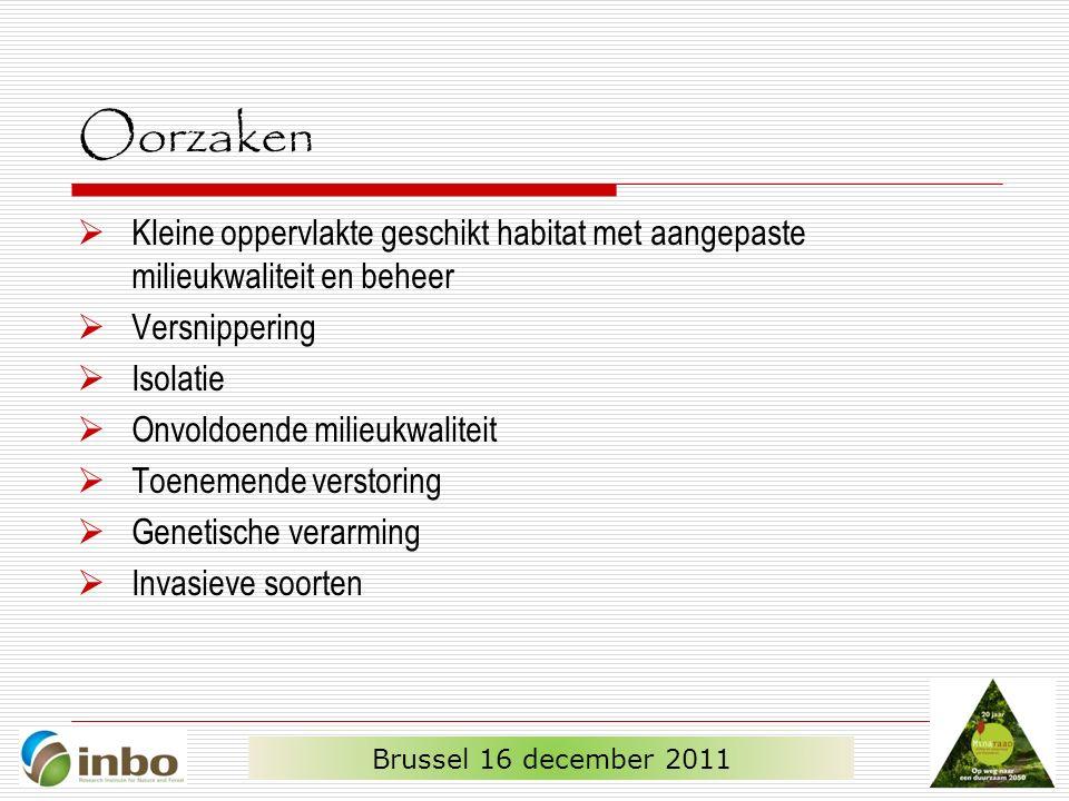 Oorzaken  Kleine oppervlakte geschikt habitat met aangepaste milieukwaliteit en beheer  Versnippering  Isolatie  Onvoldoende milieukwaliteit  Toenemende verstoring  Genetische verarming  Invasieve soorten Brussel 16 december 2011
