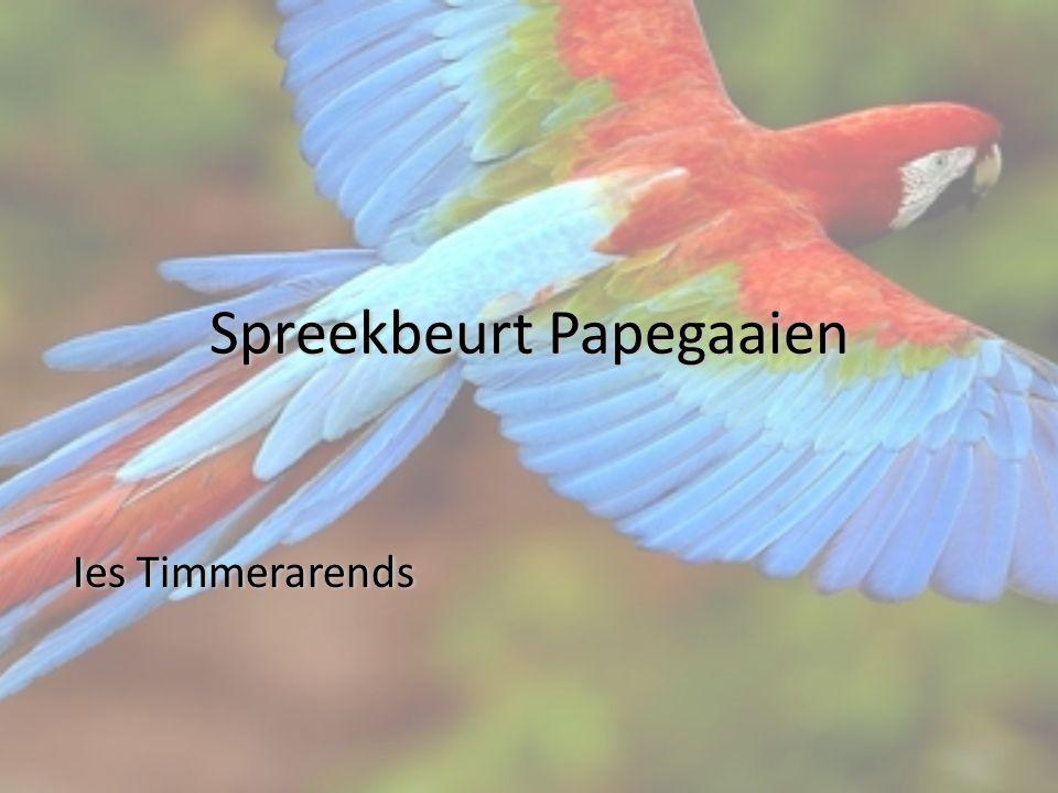 Inhoud Waar leven papegaaien.