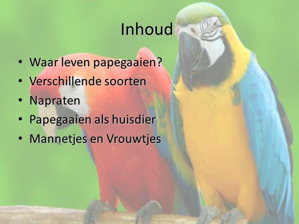 Waar leven papegaaien.