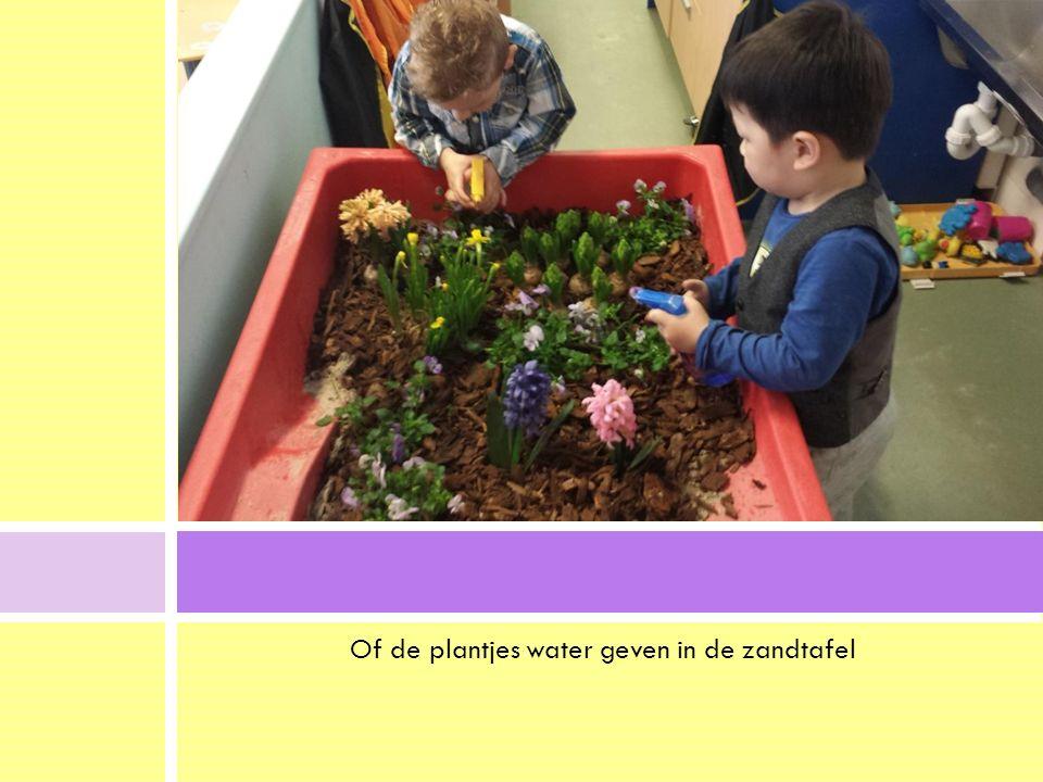 Of de plantjes water geven in de zandtafel.