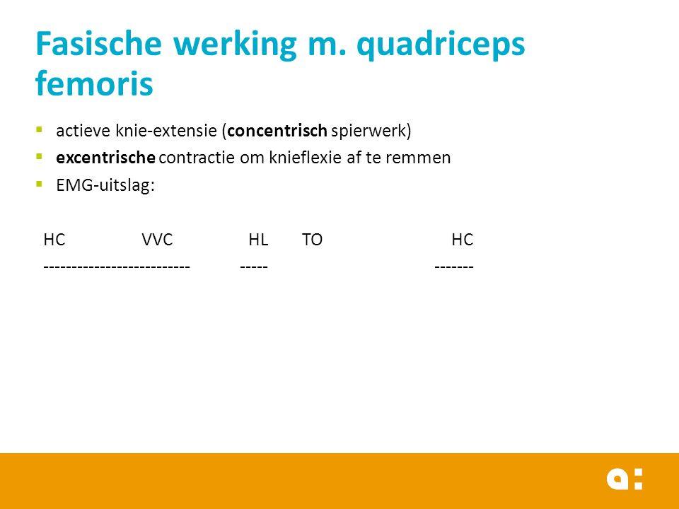 actieve knie-extensie (concentrisch spierwerk)  excentrische contractie om knieflexie af te remmen  EMG-uitslag: HCVVCHLTO HC -------------------------- ----- ------- Fasische werking m.