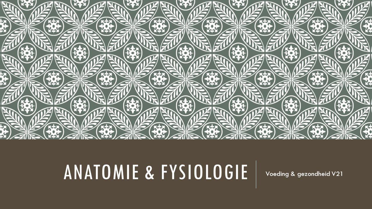 ANATOMIE & FYSIOLOGIE Voeding & gezondheid V21