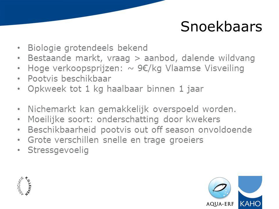 Snoekbaars Biologie grotendeels bekend Bestaande markt, vraag > aanbod, dalende wildvang Hoge verkoopsprijzen: ~ 9€/kg Vlaamse Visveiling Pootvis beschikbaar Opkweek tot 1 kg haalbaar binnen 1 jaar Nichemarkt kan gemakkelijk overspoeld worden.