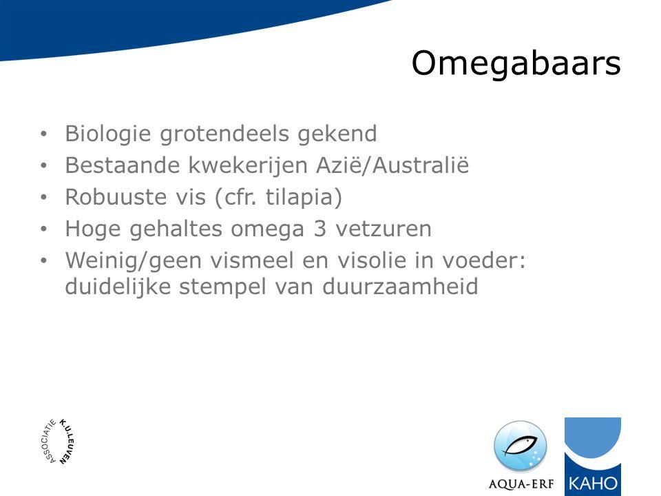 Omegabaars Biologie grotendeels gekend Bestaande kwekerijen Azië/Australië Robuuste vis (cfr.