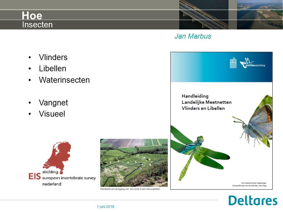 1 juni 2016 Hoe Vlinders Libellen Waterinsecten Vangnet Visueel Insecten Jan Marbus