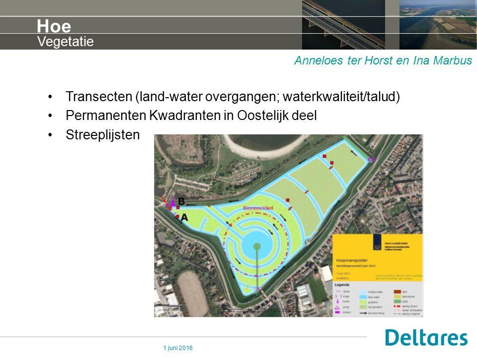 1 juni 2016 Hoe Transecten (land-water overgangen; waterkwaliteit/talud) Permanenten Kwadranten in Oostelijk deel Streeplijsten Vegetatie Anneloes ter