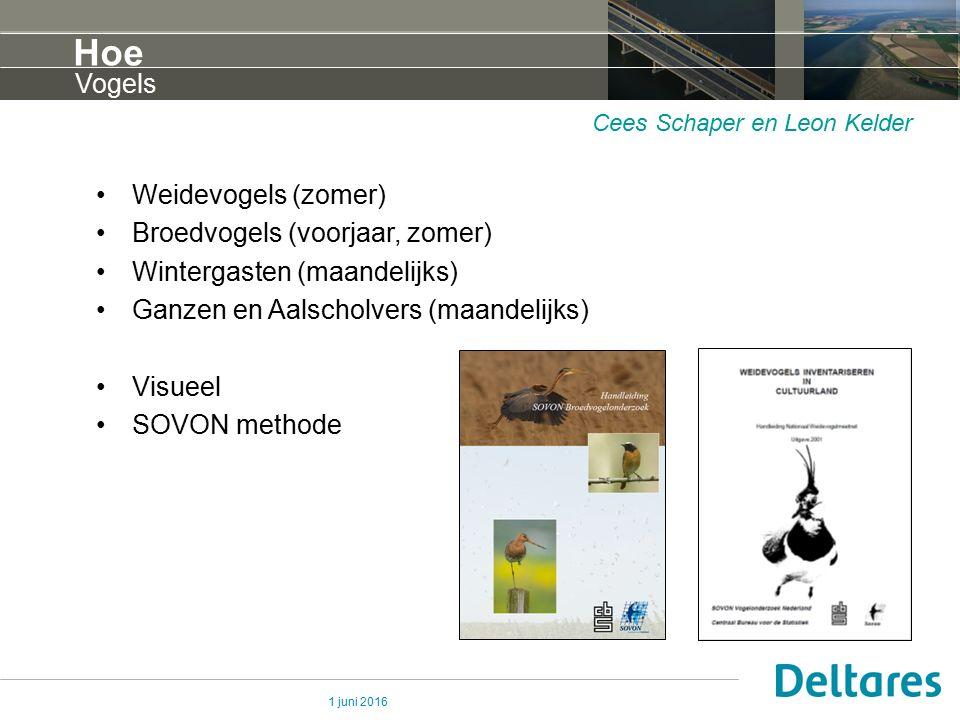1 juni 2016 Hoe Weidevogels (zomer) Broedvogels (voorjaar, zomer) Wintergasten (maandelijks) Ganzen en Aalscholvers (maandelijks) Visueel SOVON method