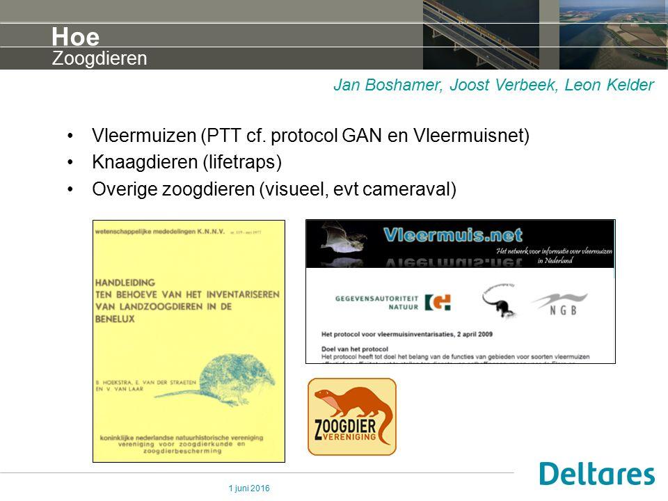 1 juni 2016 Hoe Vleermuizen (PTT cf. protocol GAN en Vleermuisnet) Knaagdieren (lifetraps) Overige zoogdieren (visueel, evt cameraval) Zoogdieren Jan