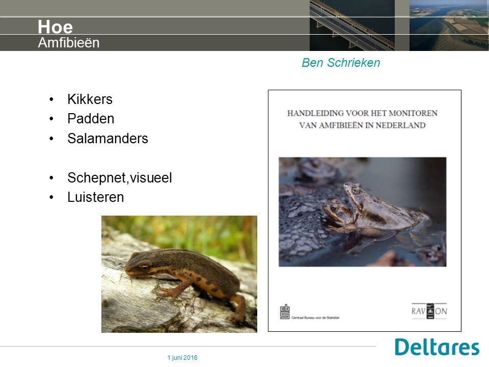 1 juni 2016 Hoe Kikkers Padden Salamanders Schepnet,visueel Luisteren Amfibieën Ben Schrieken