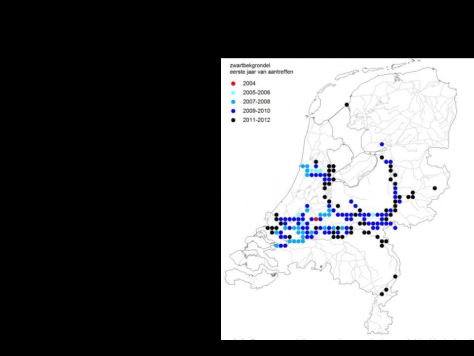 57/xx Effecten van grondels op inheemse visstand ?