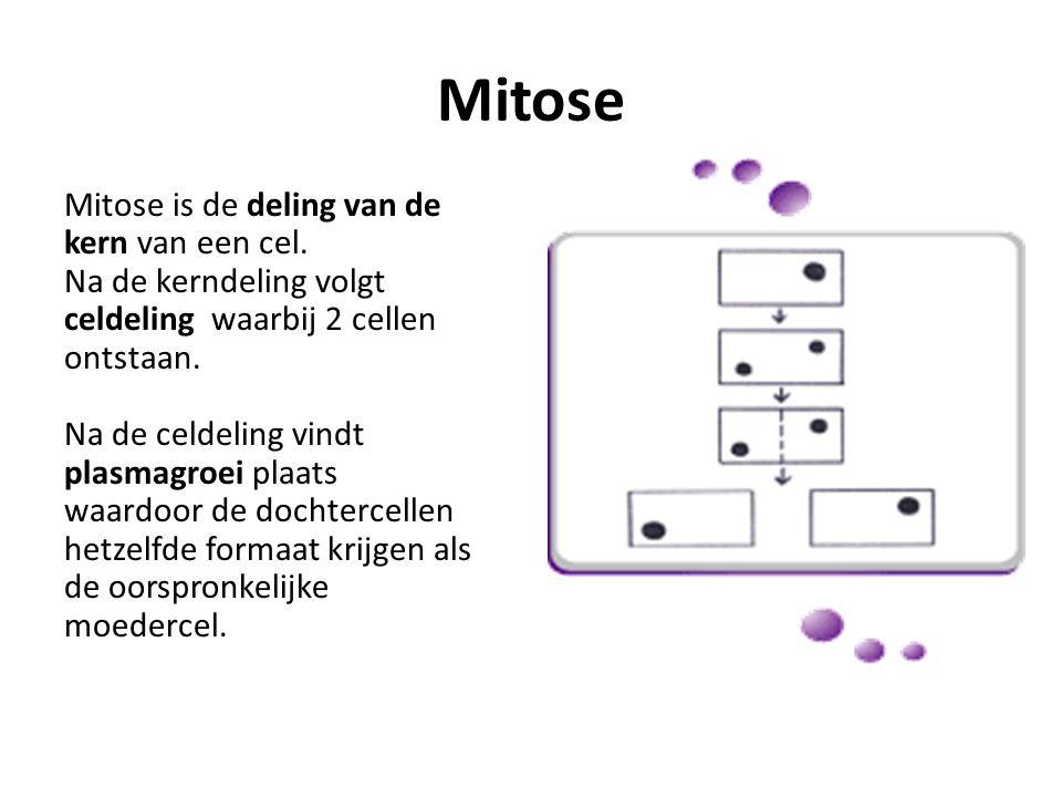 Mitose schematisch 2n  2n + 2n Ofwel: Diploïde cel  Diploïde cel + Diploïde cel Ofwel in geval van menselijke cel: 46 chromosomen  46 + 46