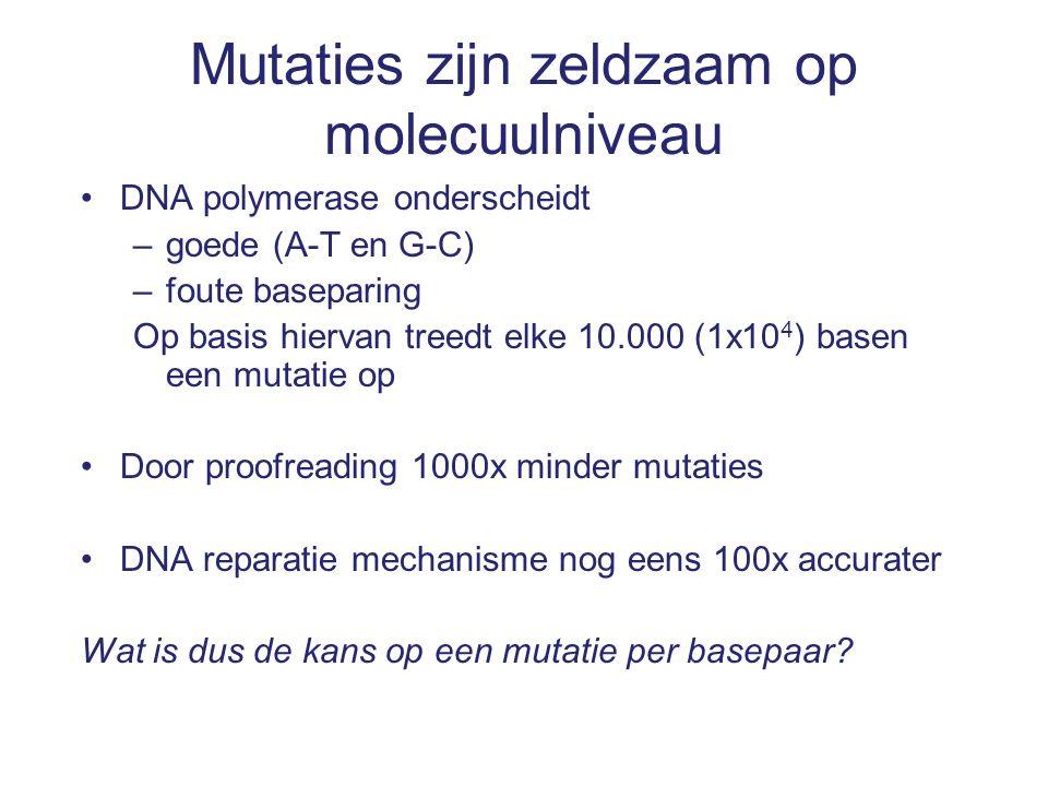 Mutaties zijn zeldzaam op molecuulniveau DNA polymerase onderscheidt –goede (A-T en G-C) –foute baseparing Op basis hiervan treedt elke 10.000 (1x10 4 ) basen een mutatie op Door proofreading 1000x minder mutaties DNA reparatie mechanisme nog eens 100x accurater Wat is dus de kans op een mutatie per basepaar