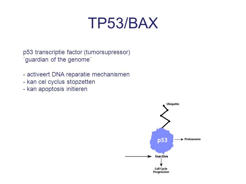 TP53/BAX p53 transcriptie factor (tumorsupressor) ´guardian of the genome´ - activeert DNA reparatie mechanismen - kan cel cyclus stopzetten - kan apoptosis initieren