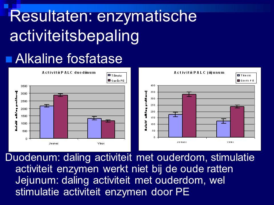 Resultaten: enzymatische activiteitsbepaling Alkaline fosfatase Duodenum: daling activiteit met ouderdom, stimulatie activiteit enzymen werkt niet bij de oude ratten Jejunum: daling activiteit met ouderdom, wel stimulatie activiteit enzymen door PE