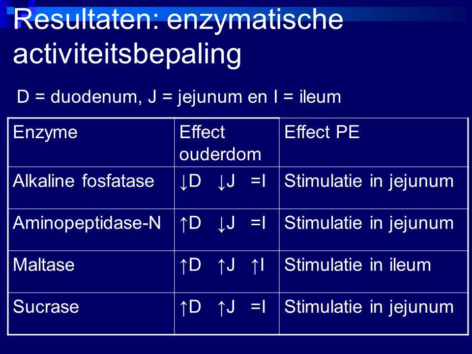 Resultaten: enzymatische activiteitsbepaling D = duodenum, J = jejunum en I = ileum EnzymeEffect ouderdom Effect PE Alkaline fosfatase↓D ↓J =IStimulatie in jejunum Aminopeptidase-N↑D ↓J =IStimulatie in jejunum Maltase↑D ↑J ↑IStimulatie in ileum Sucrase↑D ↑J =IStimulatie in jejunum
