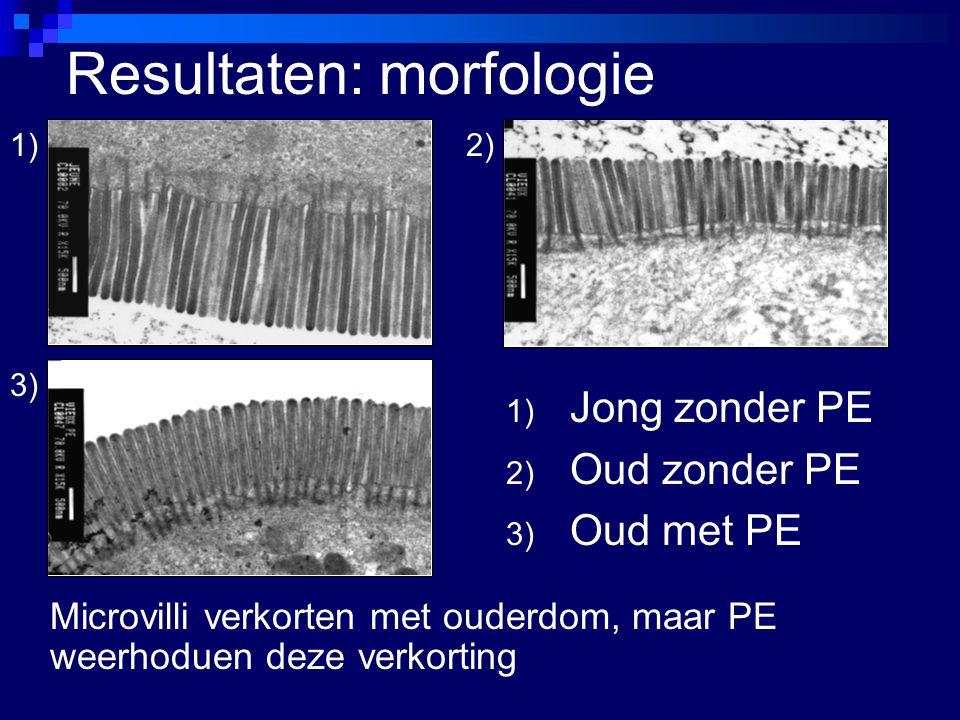 Resultaten: morfologie 1) Jong zonder PE 2) Oud zonder PE 3) Oud met PE 1)2) 3) Microvilli verkorten met ouderdom, maar PE weerhoduen deze verkorting