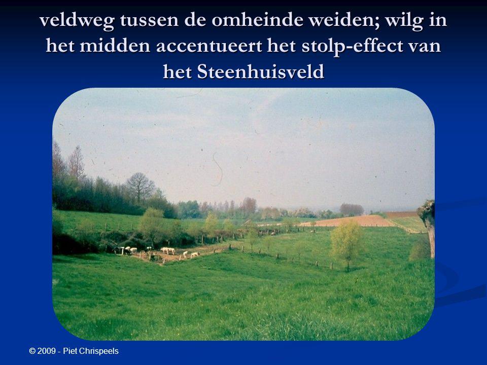 © 2009 - Piet Chrispeels veldweg tussen de omheinde weiden; wilg in het midden accentueert het stolp-effect van het Steenhuisveld