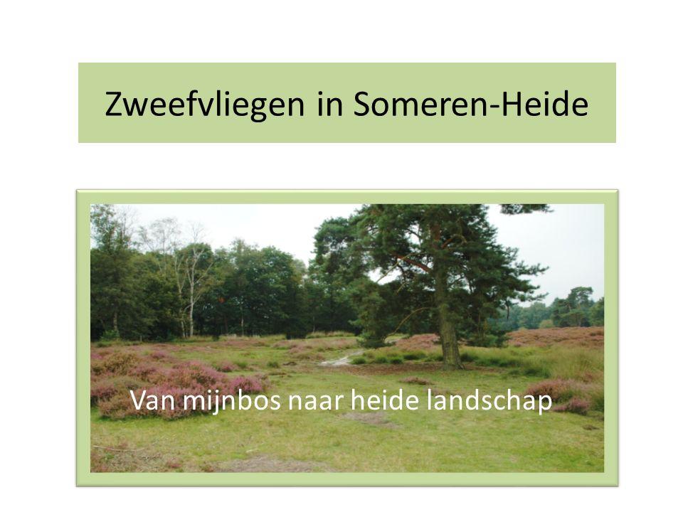 Zweefvliegen in Someren-Heide Van mijnbos naar heide landschap