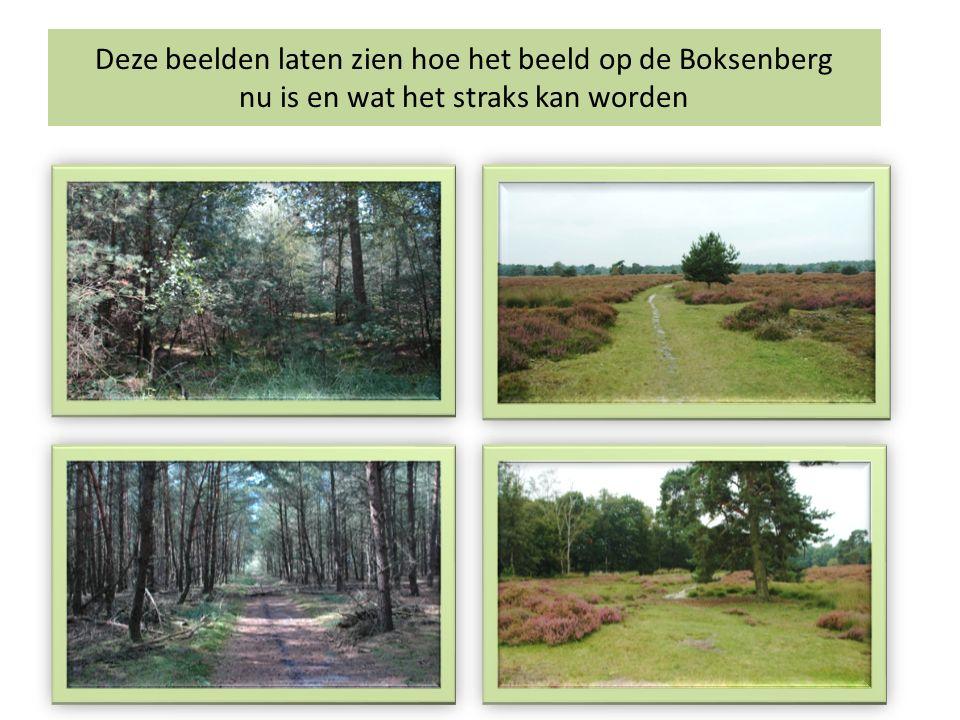 Deze beelden laten zien hoe het beeld op de Boksenberg nu is en wat het straks kan worden