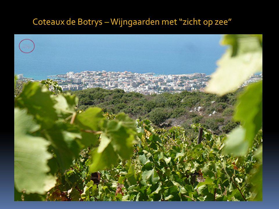 Coteaux de Botrys – Wijngaarden met zicht op zee