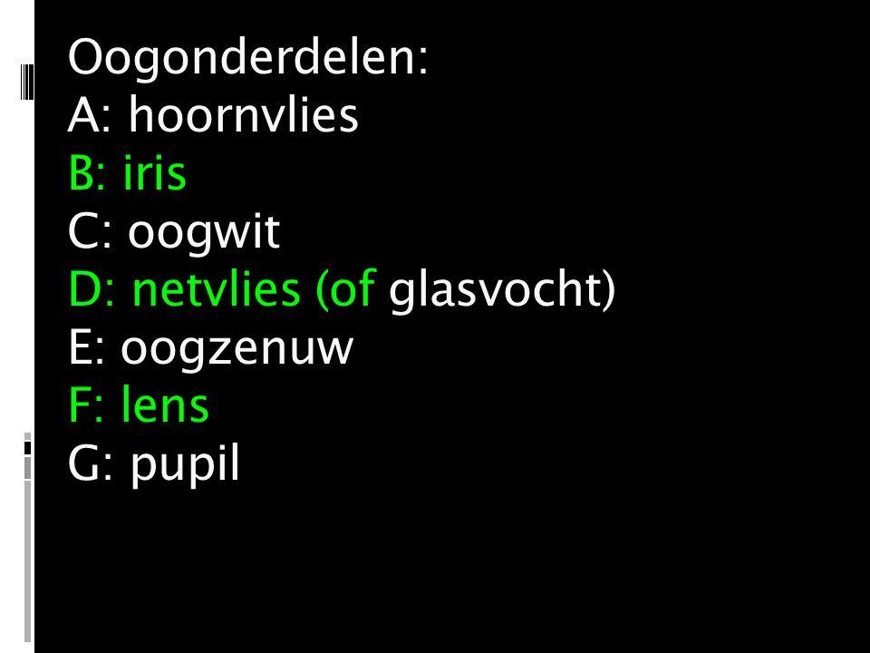Oogonderdelen: A: hoornvlies B: iris C: oogwit D: netvlies (of glasvocht) E: oogzenuw F: lens G: pupil