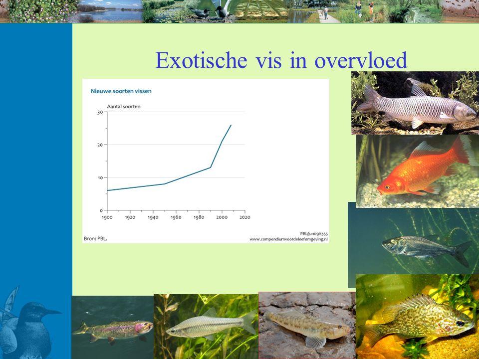 Exotische vis in overvloed