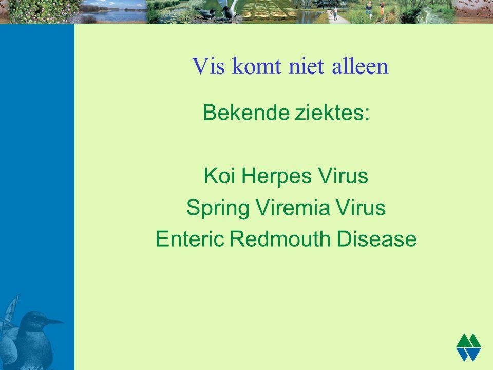 Vis komt niet alleen Bekende ziektes: Koi Herpes Virus Spring Viremia Virus Enteric Redmouth Disease