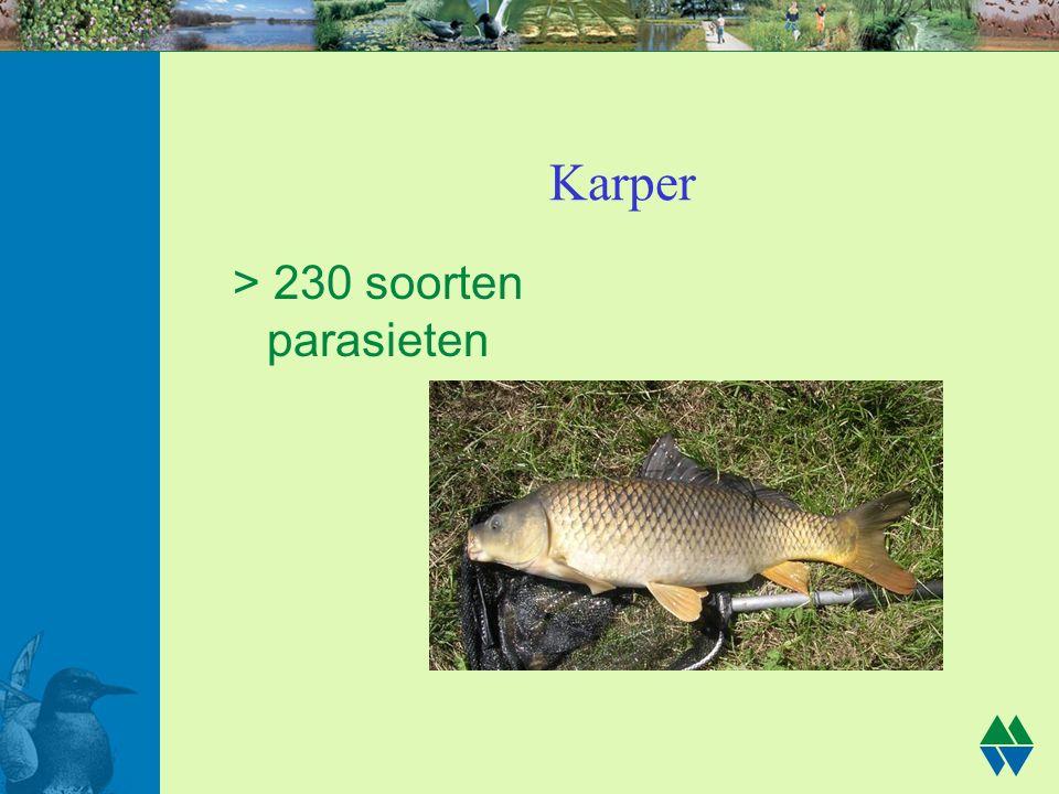 Karper > 230 soorten parasieten