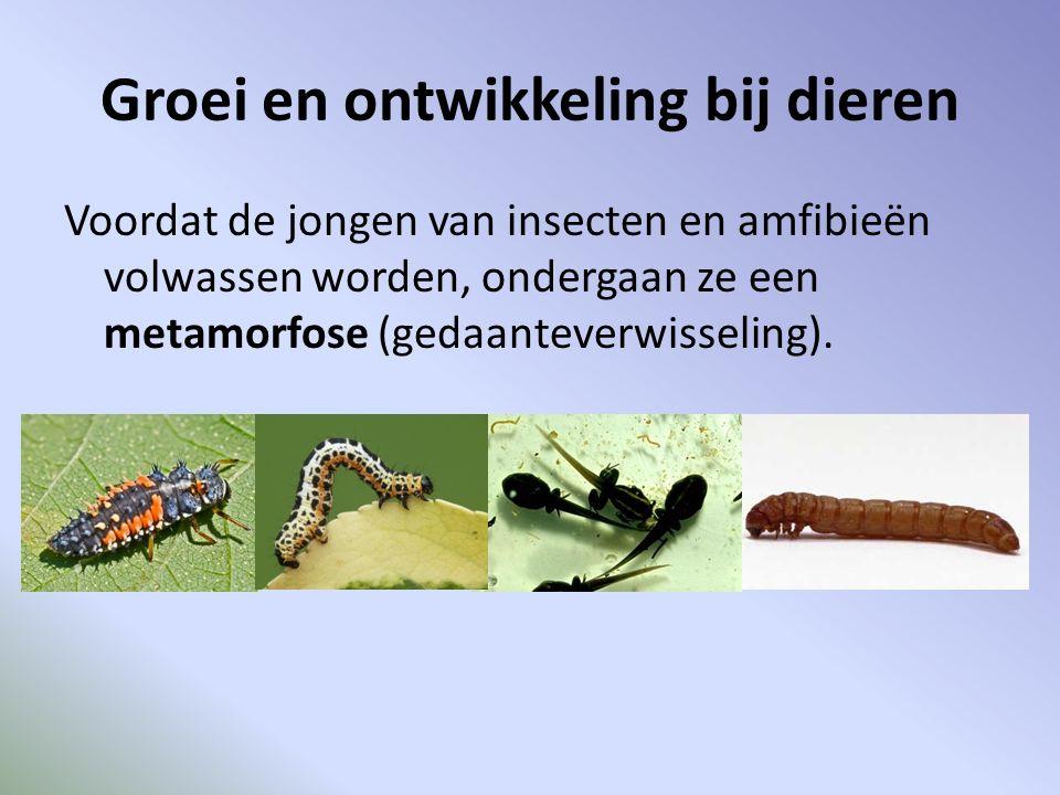 Groei en ontwikkeling bij dieren Voordat de jongen van insecten en amfibieën volwassen worden, ondergaan ze een metamorfose (gedaanteverwisseling).