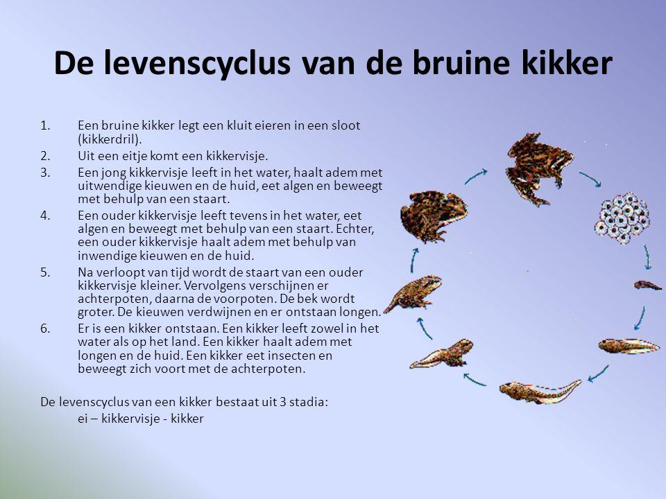 De levenscyclus van de bruine kikker 1.Een bruine kikker legt een kluit eieren in een sloot (kikkerdril). 2.Uit een eitje komt een kikkervisje. 3.Een