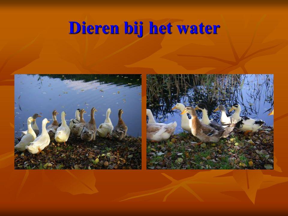 Dieren bij het water