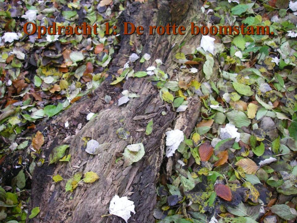 Opdracht 1: De rotte boomstam.