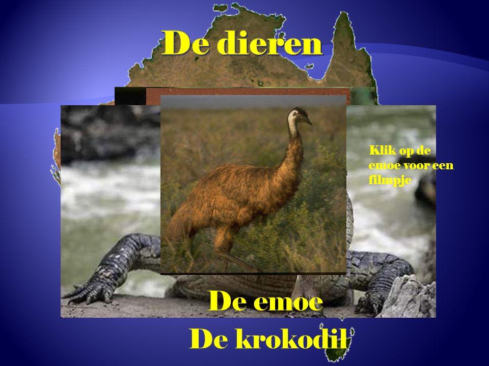 De kangoeroe De koala De dingo De krokodil De emoe Klik op de emoe voor een filmpje