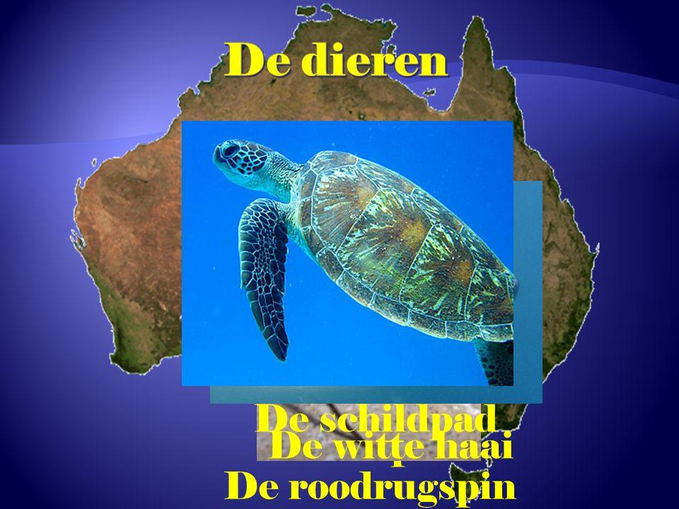 De taipan De roodrugspin De witte haai De schildpad