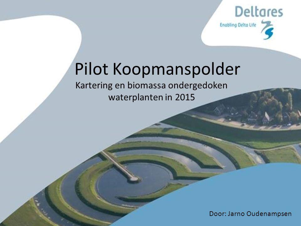 Pilot Koopmanspolder Kartering en biomassa ondergedoken waterplanten in 2015 Door: Jarno Oudenampsen